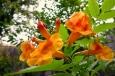 Orange Esperanza